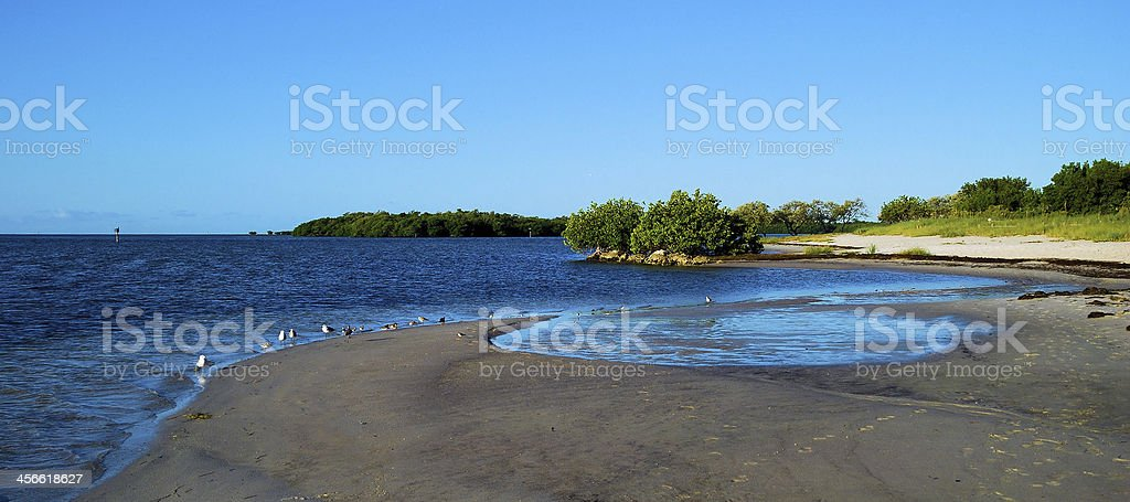 Birds on the Beach stock photo
