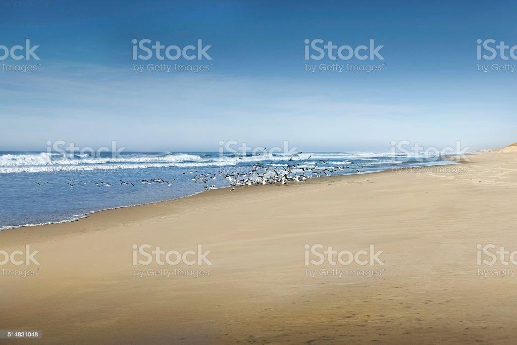 Birds on the beach stock photo