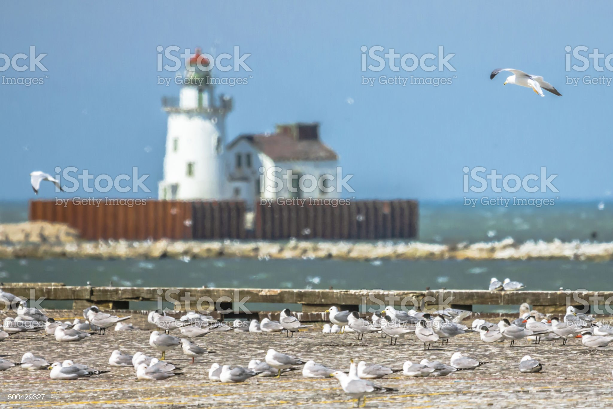 Birds on the Erie Lake royalty-free stock photo