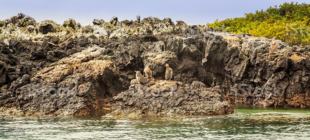 Birds on the Galapagos stock photo
