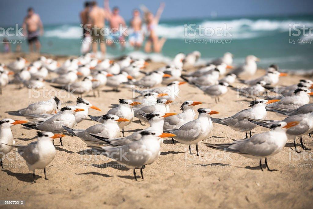 Birds on the South Beach stock photo