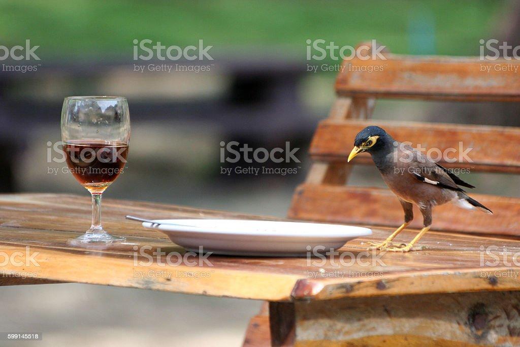 Birds on the table,Common mina. stock photo