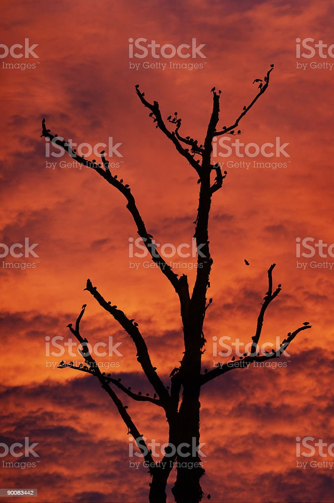 Birds on Tree royalty-free stock photo