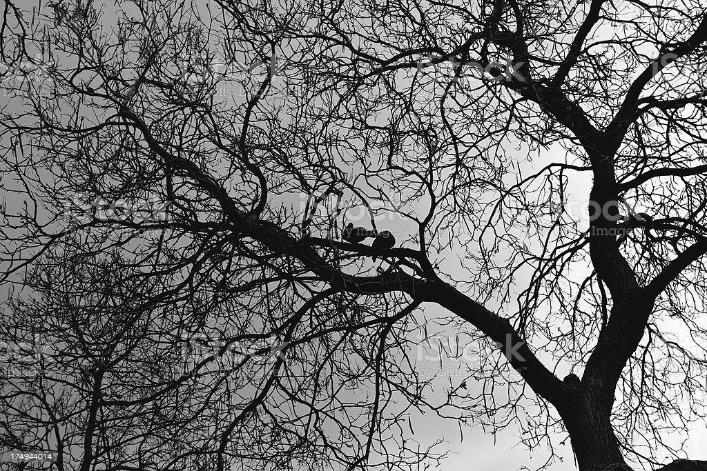 birds on tree -silhouette royalty-free stock photo