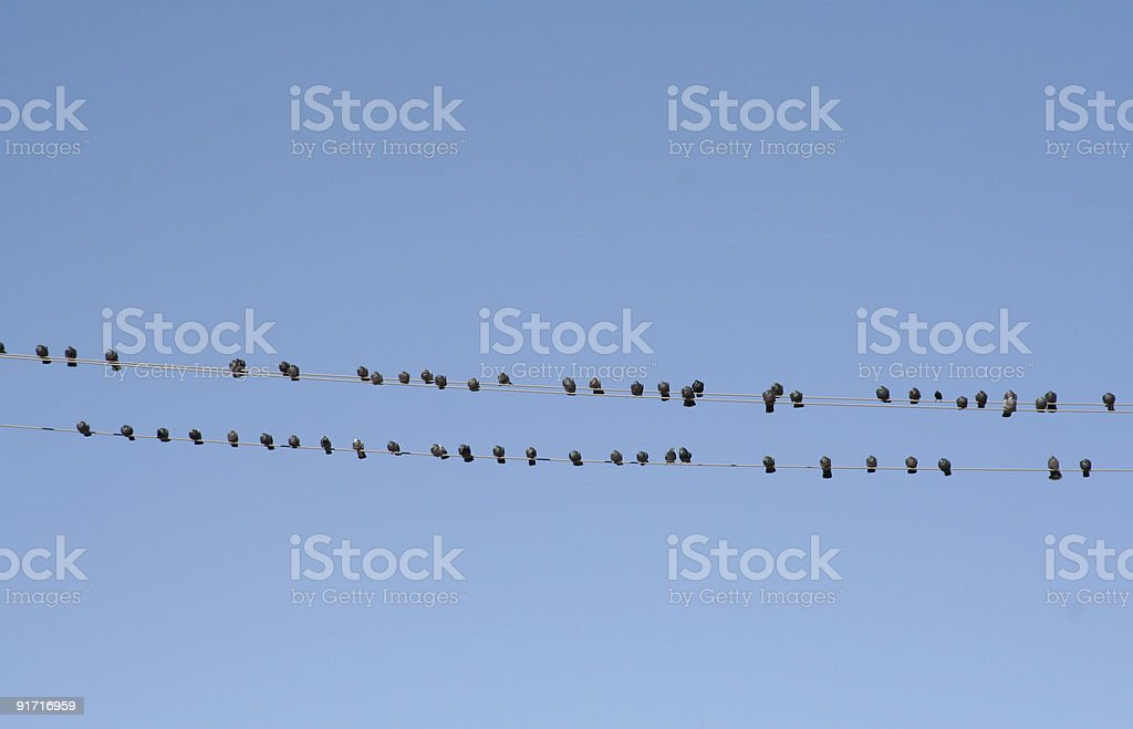 Birds on wire royalty-free stock photo