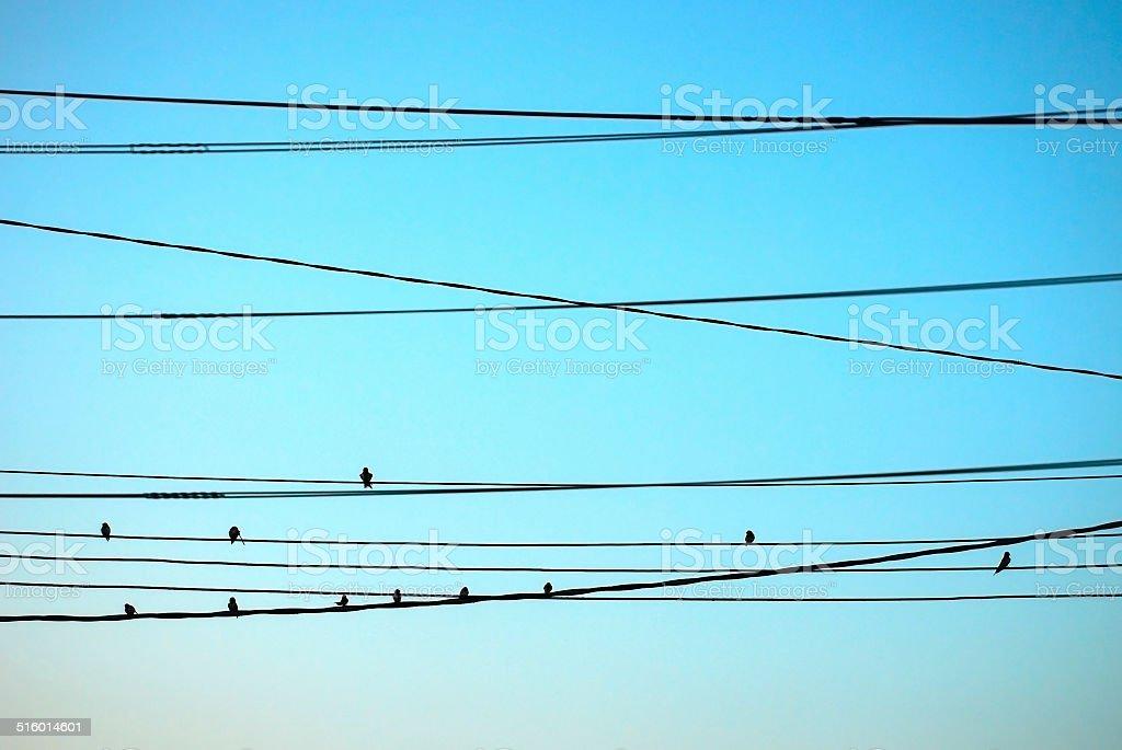 Birds on wires stock photo