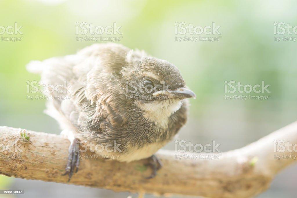 Birds on wood stock photo