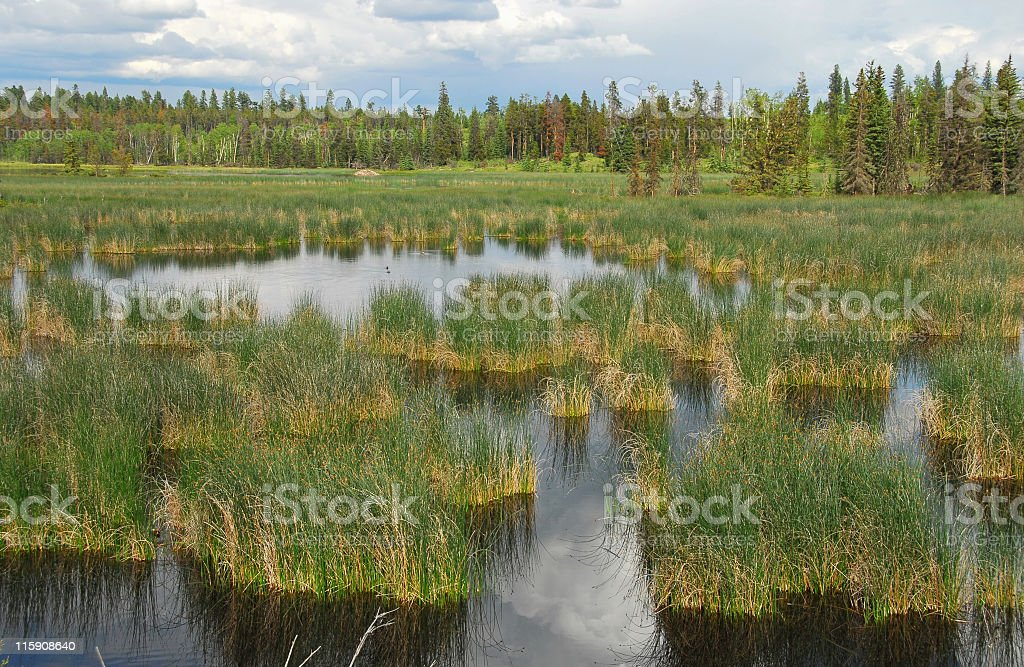 Bird's paradise in the wetlands of British Columbia,Canada stock photo