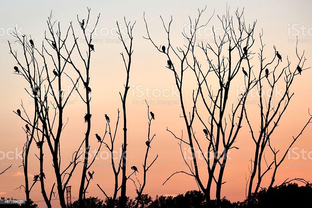 Birds Perch on Dead Trees stock photo