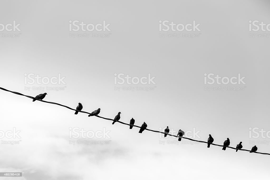 Birds perching on the electric wire stock photo