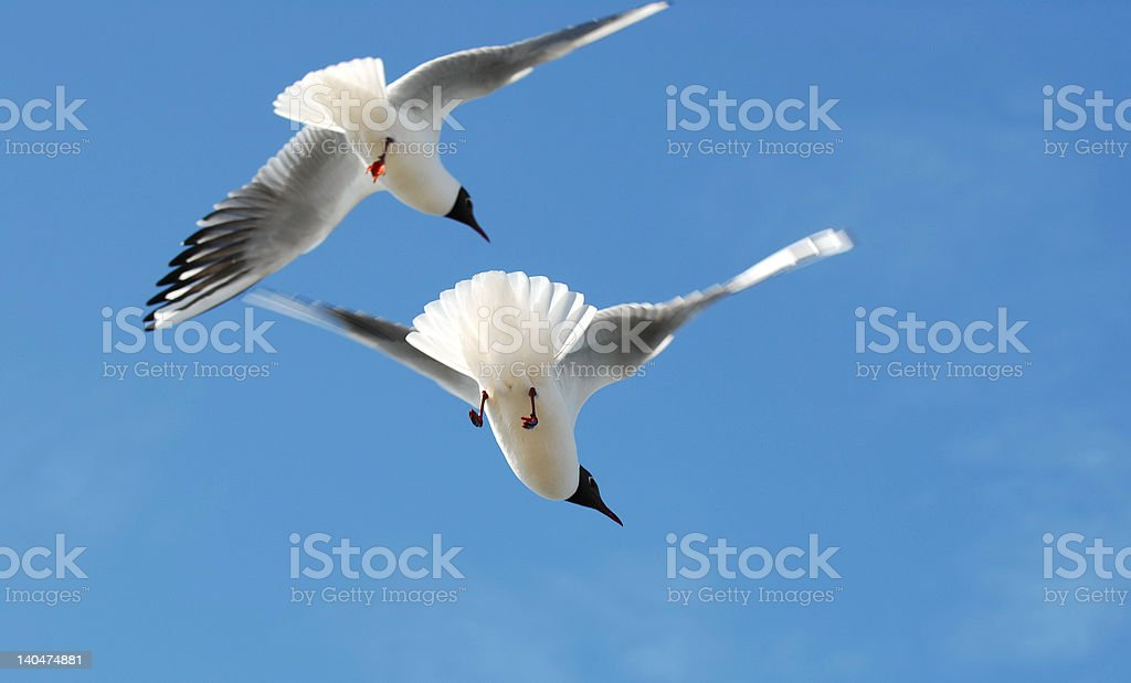 birds royalty-free stock photo