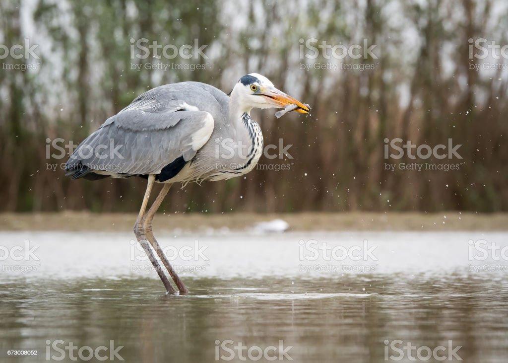 Birds stock photo