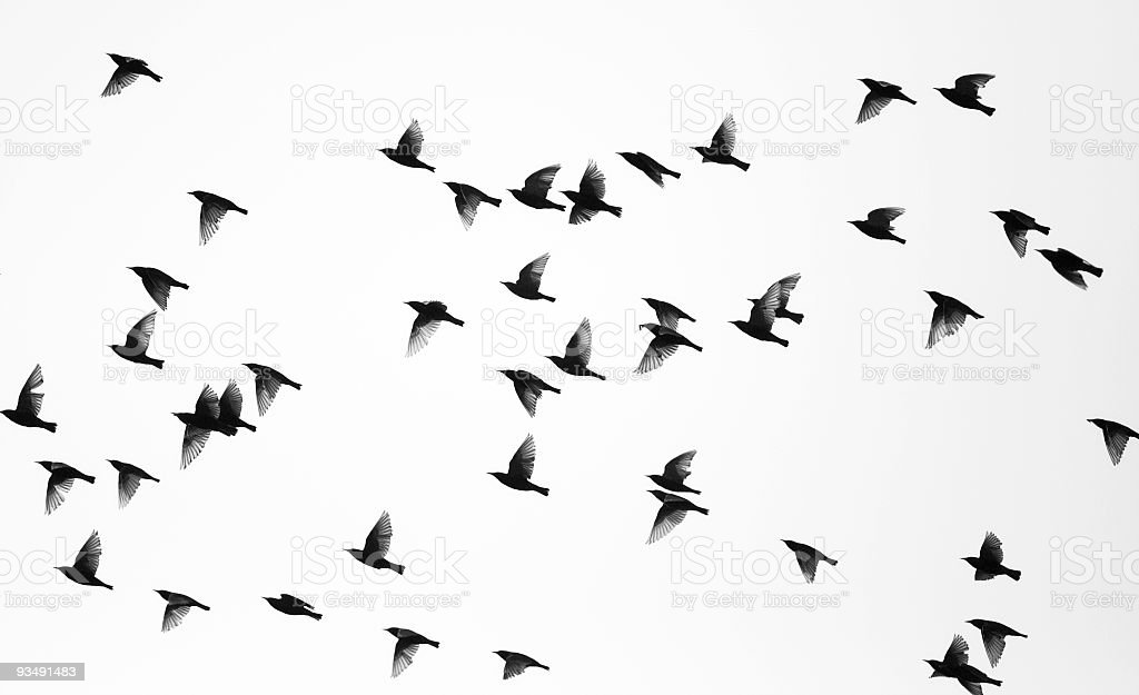 Birds stock photo
