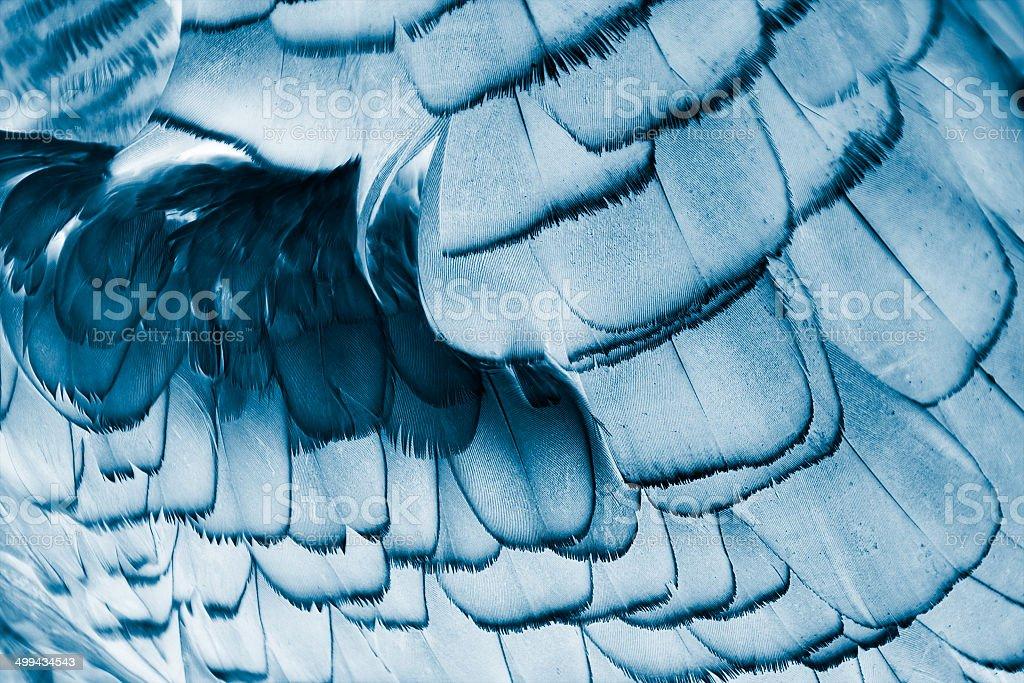 bird's plumage background royalty-free stock photo