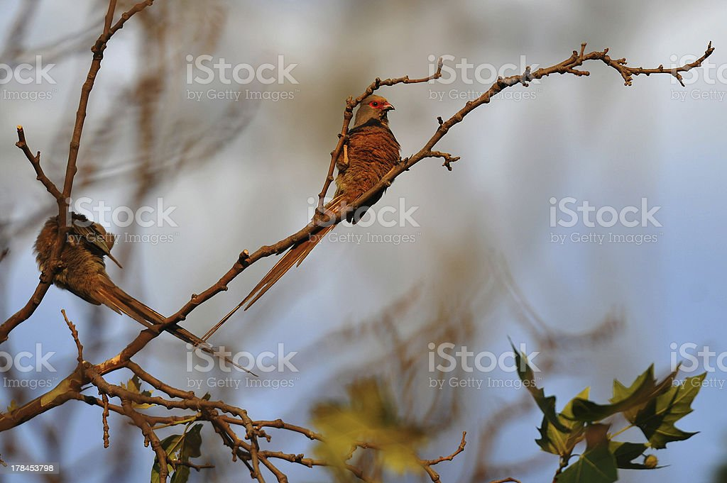 Birds / P?ssaros royalty-free stock photo