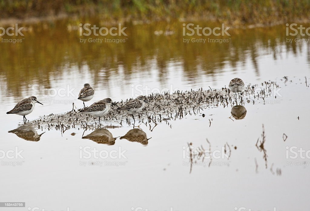 Birds Reflecting In The Water stock photo