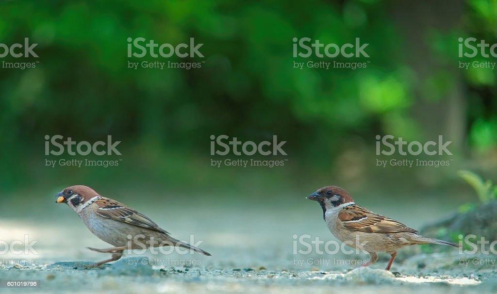 Birds running stock photo