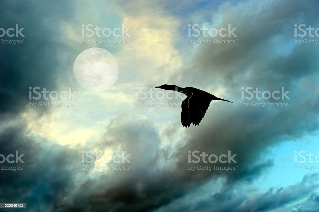 Birds Silhouette Flying stock photo