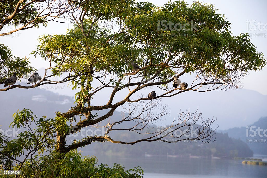 Birds sitting in a tree over a lake stock photo