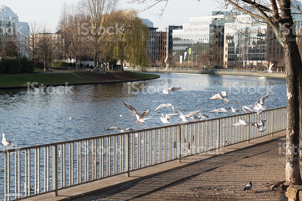 birds sitting on a fence and flying by the river in Berlin