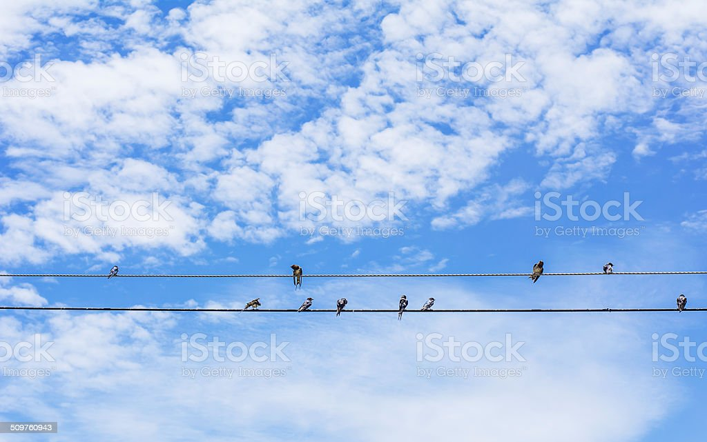 birds  sitting on a wire against blue sky background stock photo