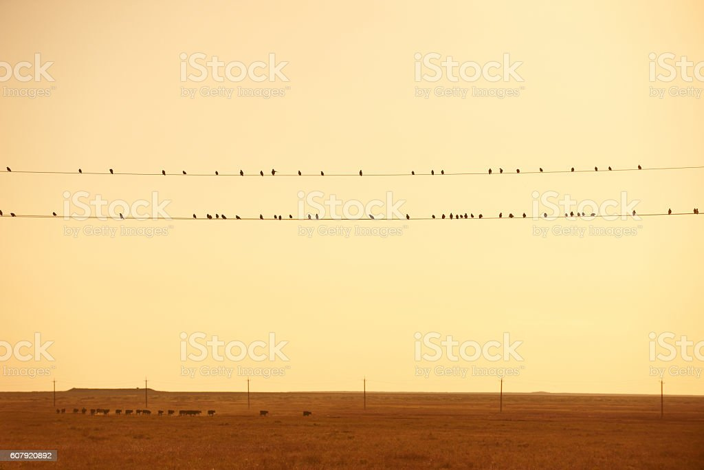 Birds sitting on electrical wires stock photo