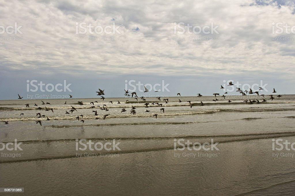 Birds take flight at beach stock photo