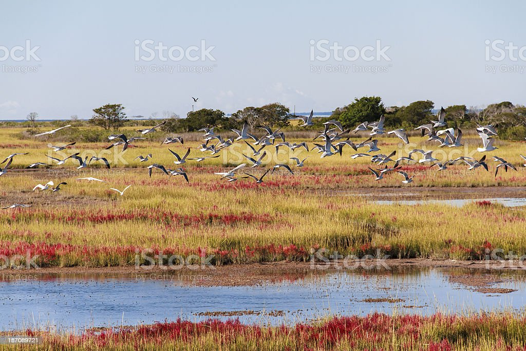 Birds Take To Flight, Assateague Island Landscape stock photo
