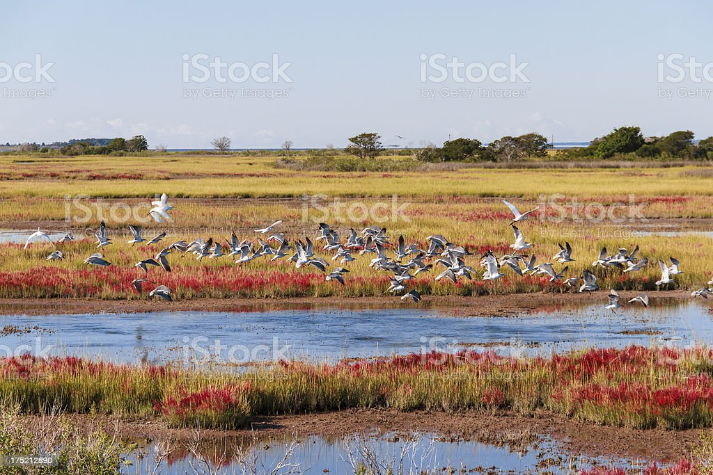 Birds Taking Flight, Assateague Island Landscape stock photo