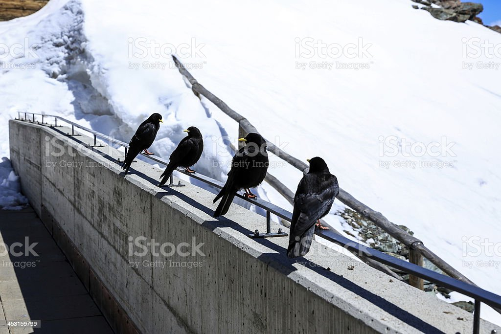 4 birds up in the mountain royalty-free stock photo