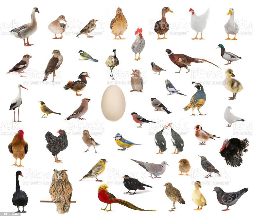 birds who have appeared from egg stock photo
