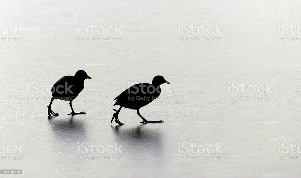 birds1 royalty-free stock photo