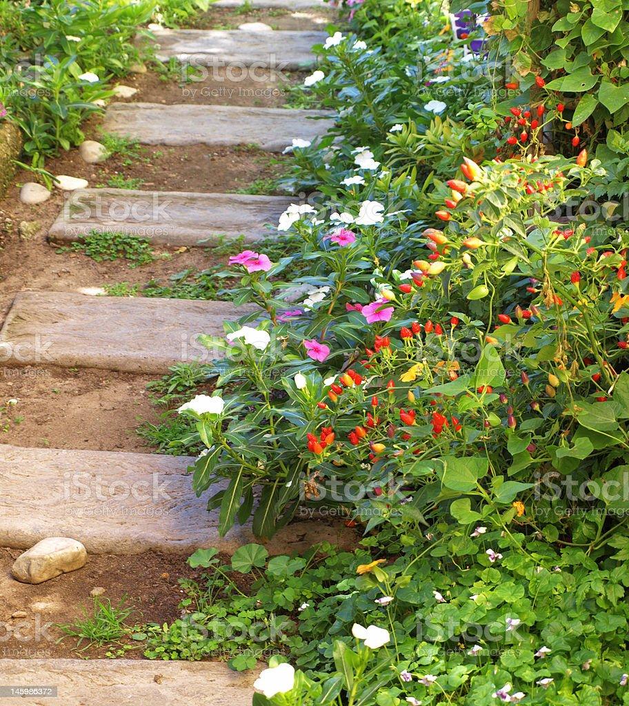 Birdseye Chillis in the flower garden royalty-free stock photo