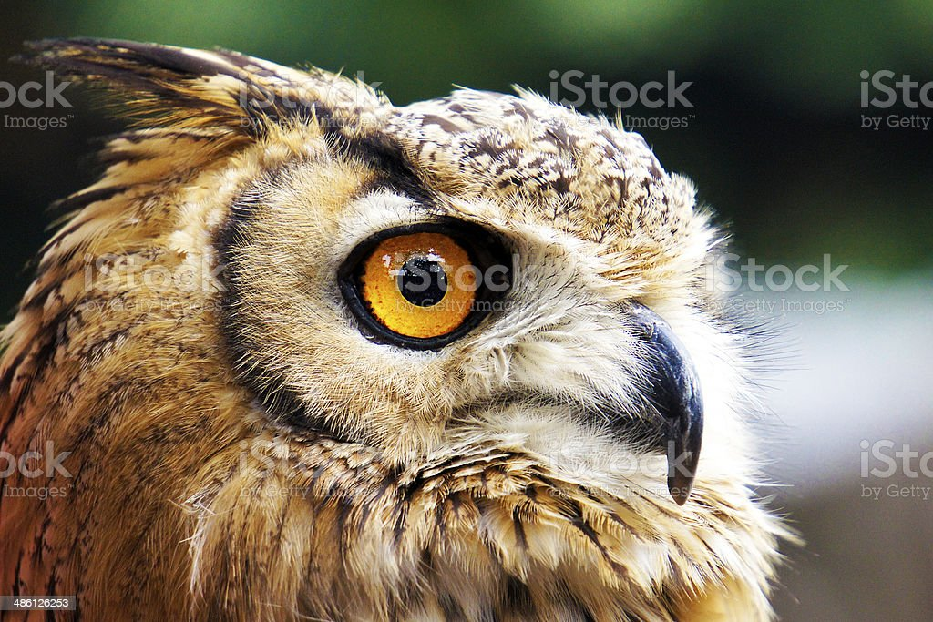 Bird's-Eye View stock photo
