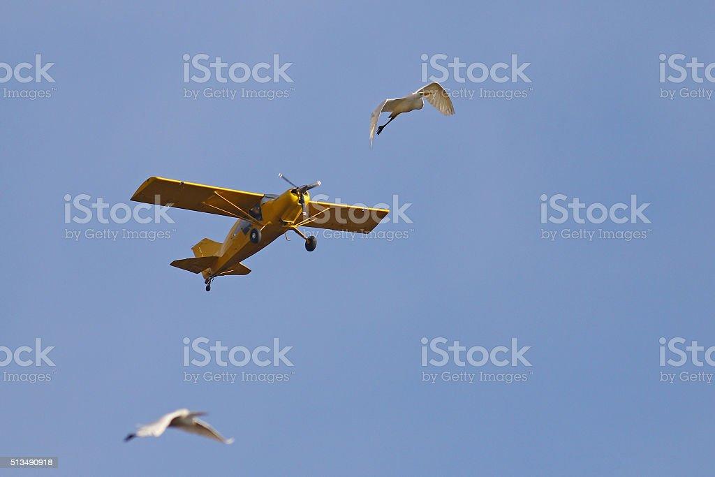Birdstrike stock photo