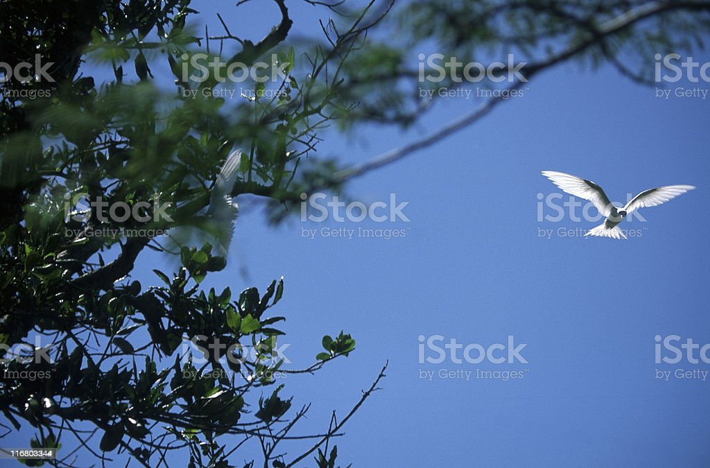 Birdwatching in the Seychelles - XXL stock photo