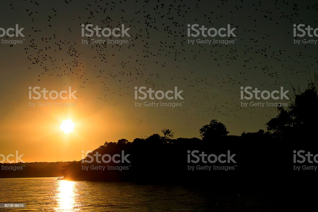 Birdwatching on the Iguassu River at Sunset stock photo