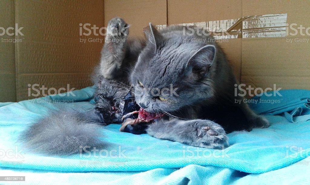 Birth cats 2 Kitten 1 stock photo
