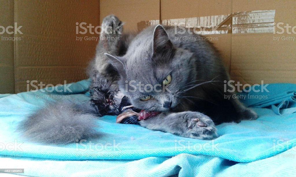 Birth cats 2 kitten 2 stock photo