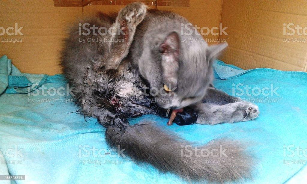 Birth cats 2 Kitten 3 stock photo