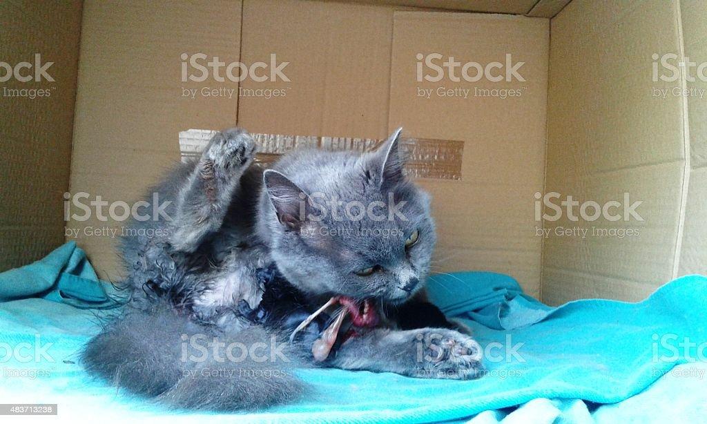 Birth cats 2 Kitten 4 stock photo