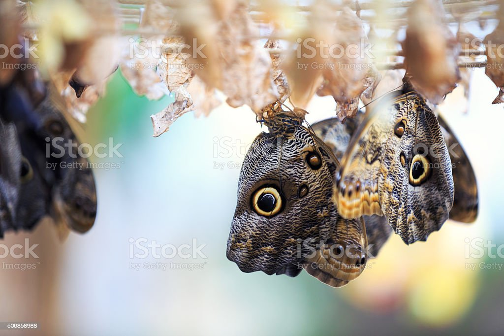 Birth Of a Butterfly stock photo