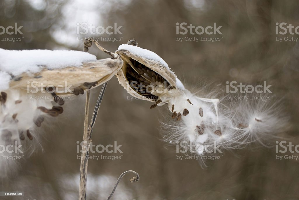 Birth of Seeds stock photo
