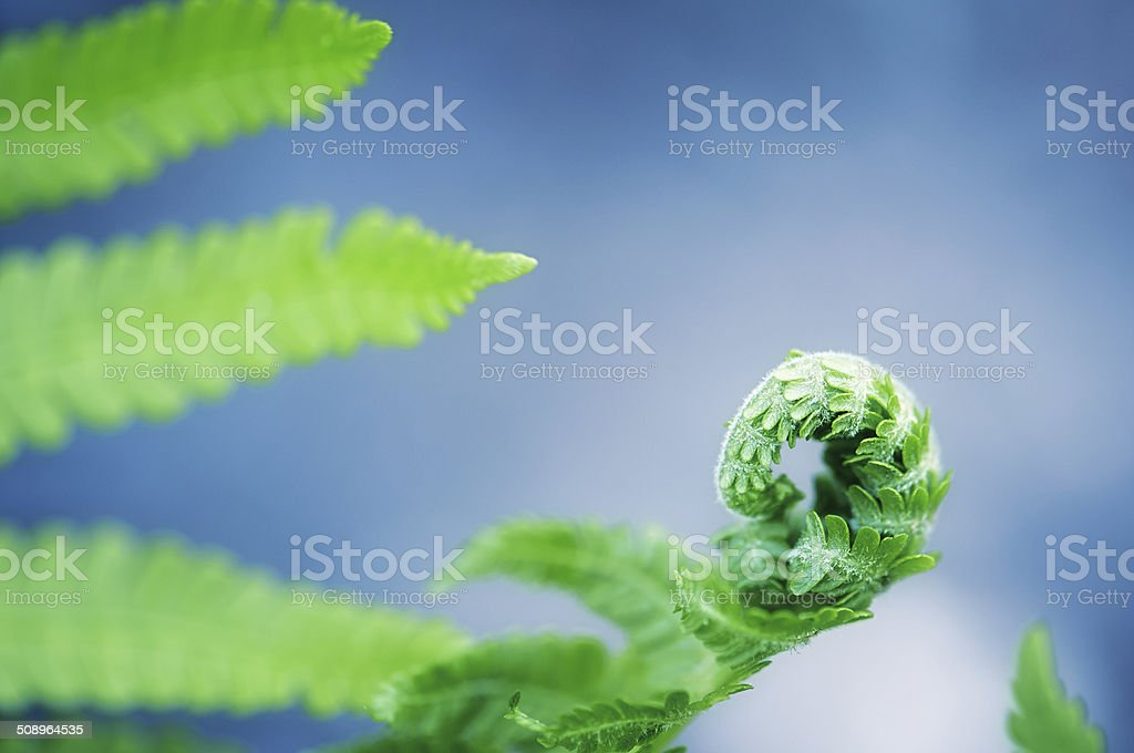 Birth of the young fern royalty-free stock photo