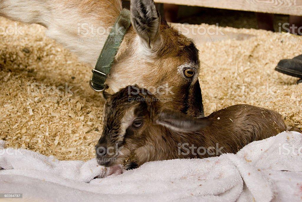 Birth stock photo