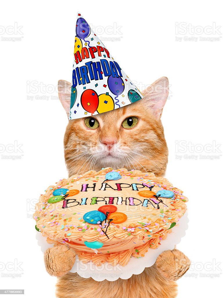 Birthday cat . stock photo