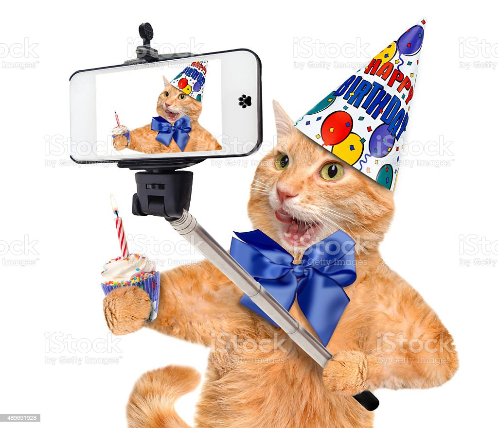 Birthday cat taking a selfie together with a smartphone. stock photo