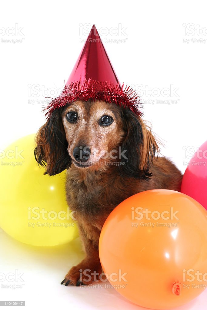 Birthday dog royalty-free stock photo