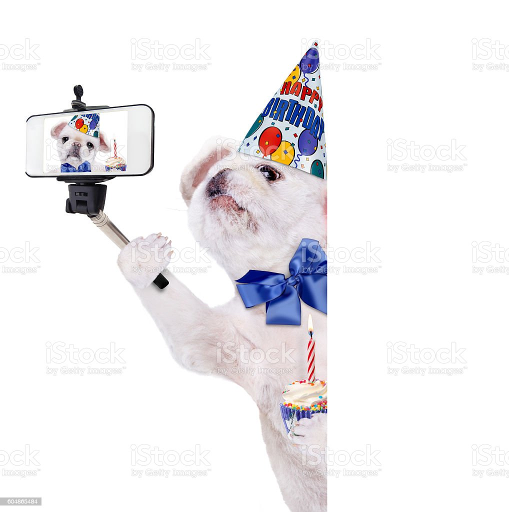 Birthday dog taking a selfie together with a smartphone. stock photo
