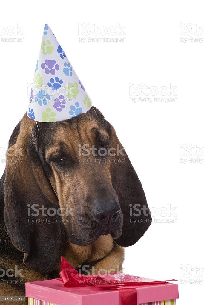 Birthday Party royalty-free stock photo